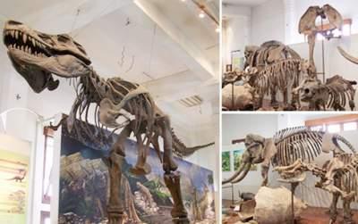jasabuspariwisata-museum-geologi-bandung-memberikan-pengalaman-wisata-sejarah-menyenangkan-fosil