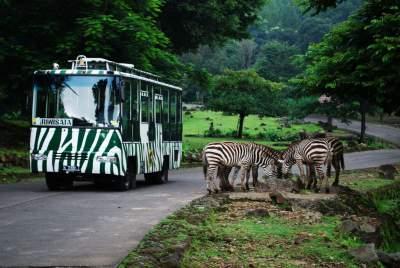 jasabuspariwisata-berkunjung-ke-taman-safari-indonesia-shuttle