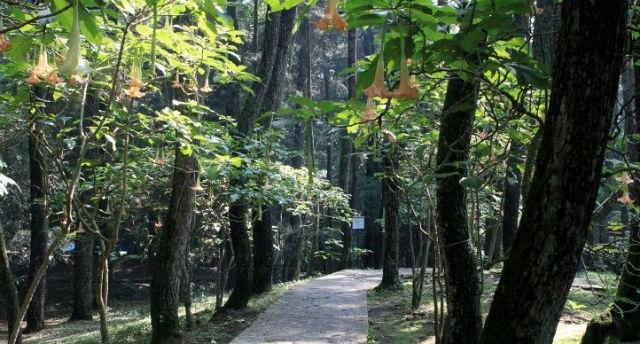 jasabuspariwisata-5-obyek-wisata-kekinian-di-kota-kelahiran-kevin-lilliana-taman-hutan-raya
