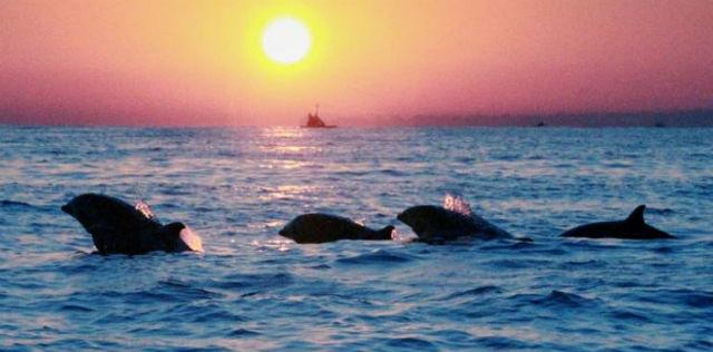 jasabuspariwisata-berwisata-mengeksplor-cantiknya-pulau-dewata-ditemani-toyota-hiace-pantai-lovina